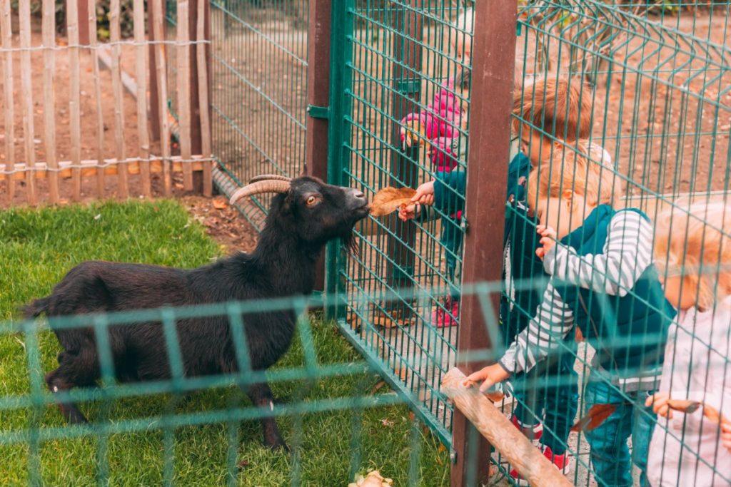 Dieren-kinderdagverblijf